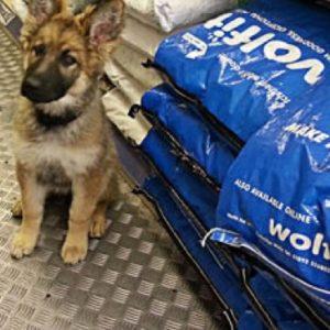 Wolfit Dog Food
